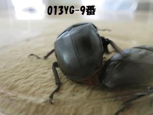 Yg9802520_4