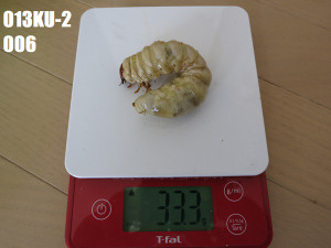 Ku2006333