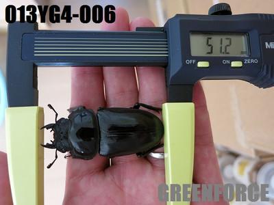 Yg4006