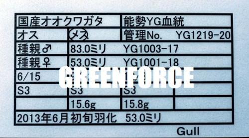 Yg121920_2