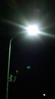 新潟オオクワ灯火採集